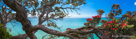 Sea view through Pohutukawas, from St. Heliers, Auckland, NZ - landscape photo wall art for sale
