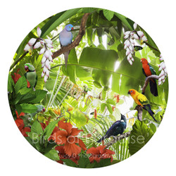 Round bird artwork - NZ Tui, Indian Ringneck, King Parrot, Sun Conure,  Alexandrine Parrot - art print for sale.