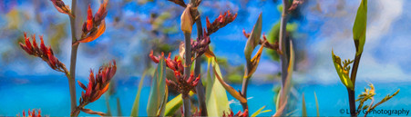 NZ Flax flowers and buds -New Zealand art print / canvas photo print for sale by Lucy G.