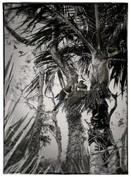 Woodpigeons NZ art print