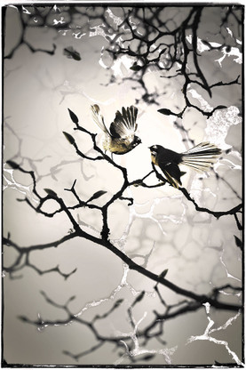 NZ Fantail -  silver foil art print / wall art for sale by Lucy G