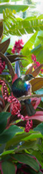 NZ Tui art print (whole image)