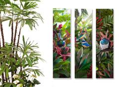Tui, Kingfisher and Kereru set of 3 NZ art prints