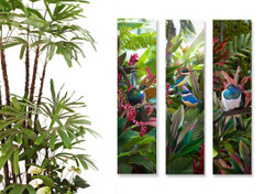Tui, Kingfisher and Kereru with tropical plants - set of 3 NZ art prints / wall art for sale