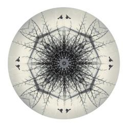 Harakeke (flax) Mandela - circular NZ art print