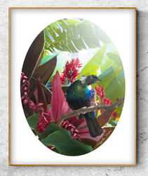 ''Hope'' tropical NZ Tui bird in lush garden setting.  A3 oval photo prints for sale.