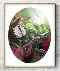 Two NZ Fantail birds in tropical plant setting - oval photo art print / wall art for sale