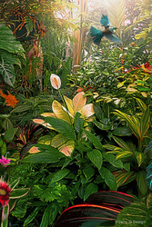 ''Earthly Delights'' tropical NZ Tui bird in lush garden setting.  A3  photo art prints for sale.