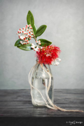 NZ Pohutukawa in milk bottle -photo art print / wall art for sale