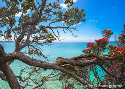 NZ Pohutukawa and beach landscape photo print - photo art print / wall art for sale