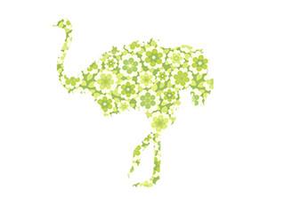 WALLPAPER WILDLIFE OSTRICH by Inke Heiland wm-ostrich-0119