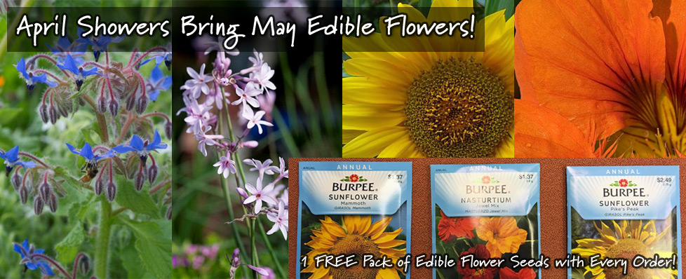 April Showers Bring May Edible Flowers