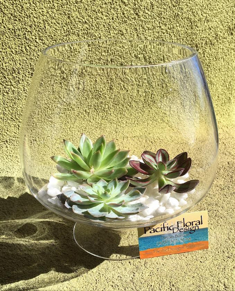 Succulent Bowl - Glass  Bowl - Long Lasting