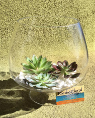 Succulent Bowl - Glass  Bowl - Long Lasting