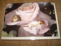 English Fairy occasion card,A quiet corner