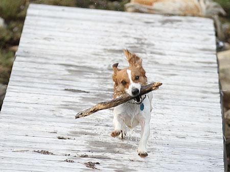 dog-stick.jpg
