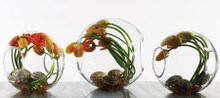 Crosswinds Vases Double Opened Globes, multiple sizes