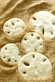 Sand Dollar Cookies - (Free Recipe below)