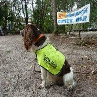 brisbane-city-council-cane-toad-detector-dog.jpg