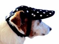 dog-hat-309-bindi.jpg