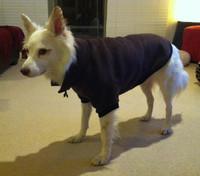 Bella (Koolie) shows off her beautiful Fleecy Dog Jumper