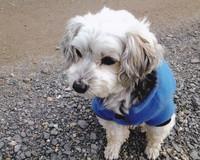 Prada in her sky blue fleecy jumper