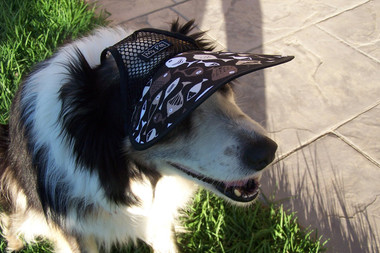 LARGE size dog hat on Border Collie (more shade for eyes & more comfortable)