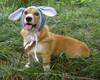 Rabbit Hat DHH-002