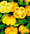 Bulk Yellow Stuffer Tomato Seeds