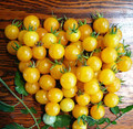 Yellow Currant Tomato Seeds