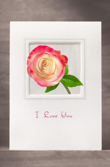 Rose FF19-NC