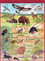 Plains Animals Poster