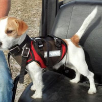 N.2. DEFENDER CATCH VEST (TERRIER SIZE)