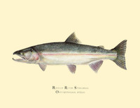 The limited edition Russian River steelhead giclee print uses the finest reproduction technology available to artists. This is a museum-quality reproduction printed on heavy, archival watercolor paper with archival inks. It is suitable for handing down to the next generation.