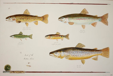 The Trout of the Eastern Sierra limited edition giclee print is a gallery-wrapped print at the same size as the original.