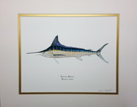 2014 Striped Marlin (Kajikia audax) 11x14 Matted Fine Art Print