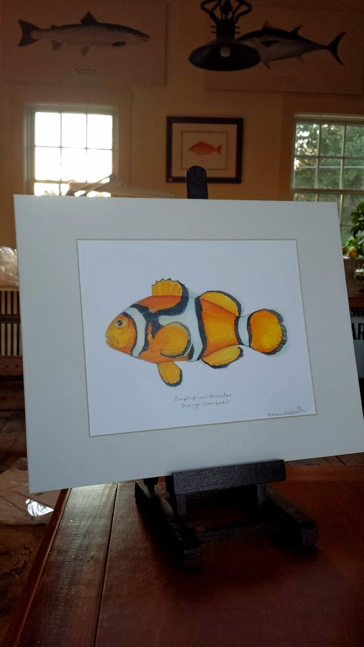 WYSIWYG Orange (Percula) Clownfish Open Edition Print - Karen Talbot Art