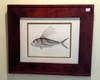 Original Roosterfish Scientific Illustration (Study)