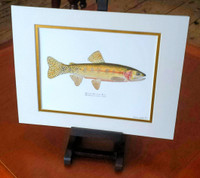 Greenback Cutthroat Trout (Oncorhynchus clarkii stomias) Fine Art Print, Hand-Signed