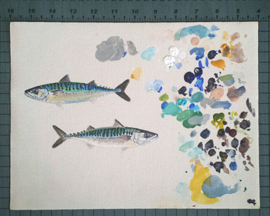 Atlantic Mackerel Study #1 on Canvas