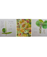 Sea Grape (Coccoloba uvifera) Limited Edition Giclee Print Set Pre-Order