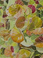 Sea Grape (Coccoloba uvifera) 11x14 Matted Fine Art Print - Plate 2