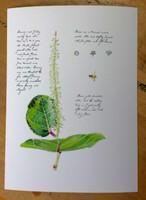 WYSIWYG Sea Grape Flower Scientific Illustration Artist's Proof