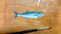 Bluefish Handpainted Pint Glass