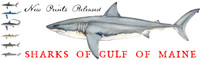 Gulf of Maine Shark Prints (Set of 8 Prints)