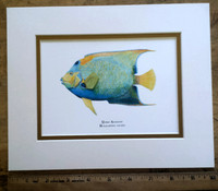 WYSIWYG Queen Angelfish Print