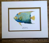 WYSIWYG Queen Angelfish Print
