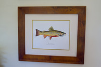 Brook Trout (Salvelinus fontinalis) 16x20 Limited Edition Giclee Print