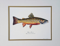 "Eastern Brook Trout (Salvelinus fontinalis) 11""x14"" Fine Art Print"