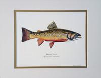 "Eastern Brook Trout (Salvelinus fontinalis) 11""x14"" Fine Art Print"